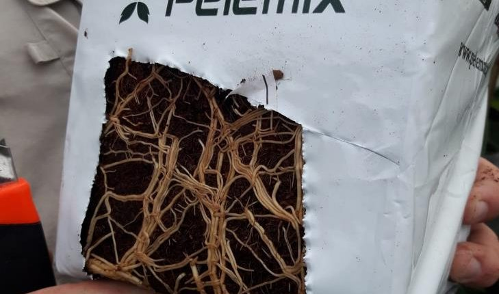 roots development in coir open top