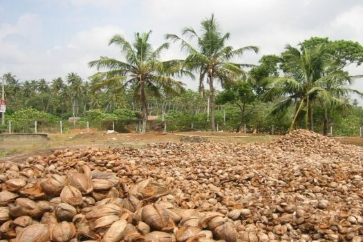 grow in coco coir